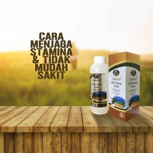 Suplemen Untuk Menjaga Stamina Jelly Gamat Walet
