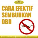 Cara Ini Efektif Sembuhkan DBD