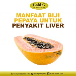 Manfaat Biji Pepaya Untuk Penyakit Liver 1