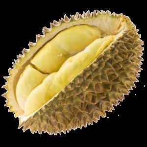 Durian Asam Urat