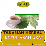 tanaman herbal untuk asam urat